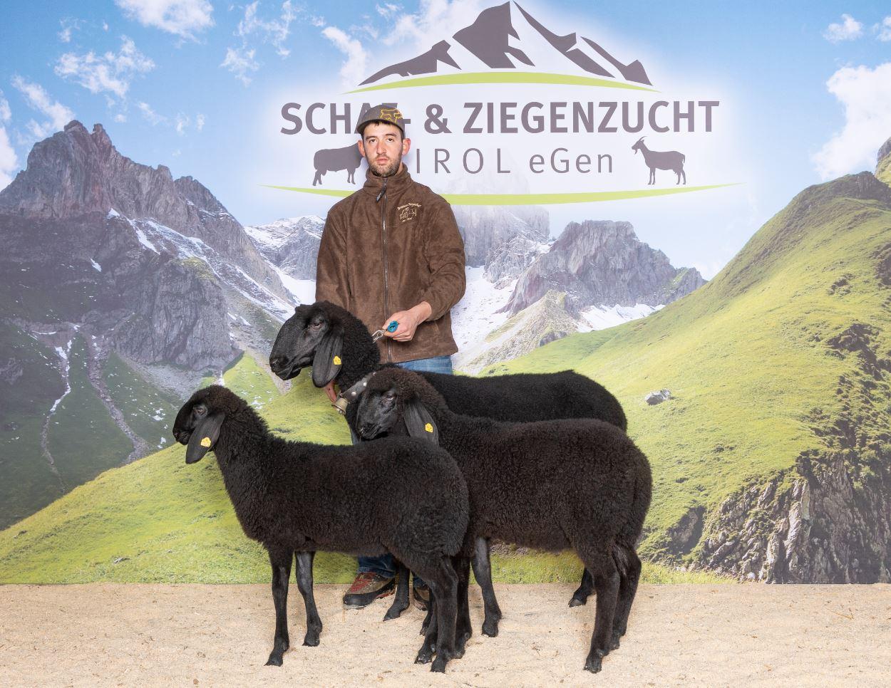 Schwarzes Tiroler Bergschaf